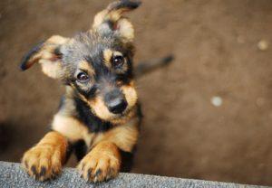 マッチングアプリの写真で犬を設定