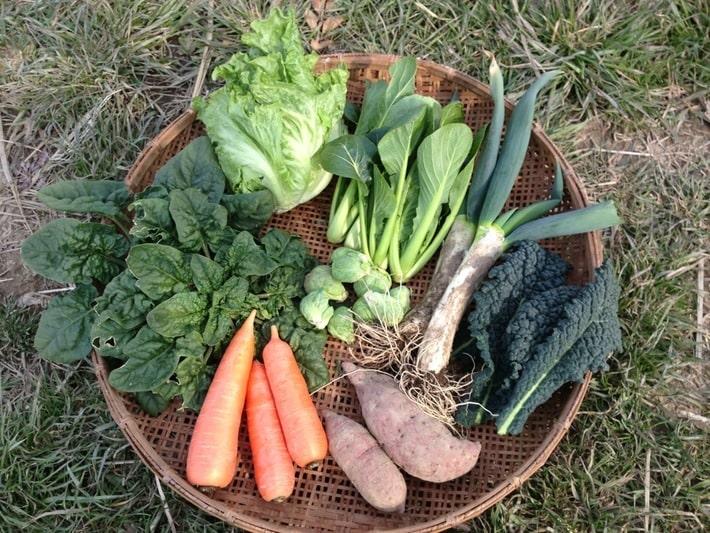 Raitai 野菜1